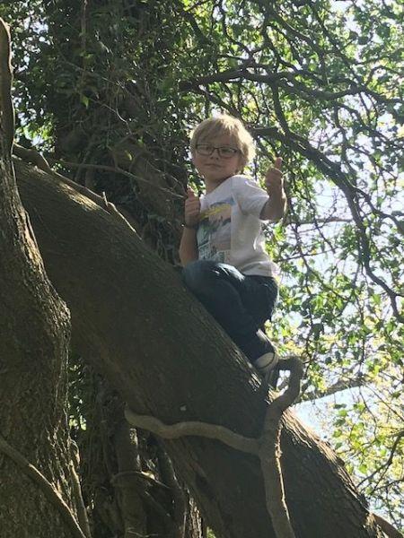 Robin-in-a-tree