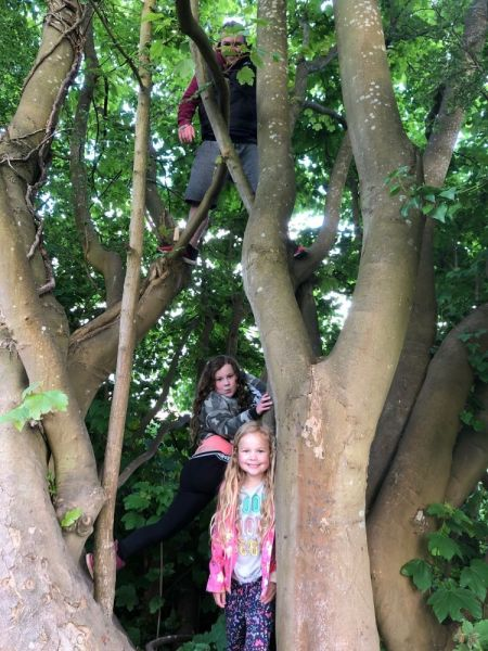 Isla-tree